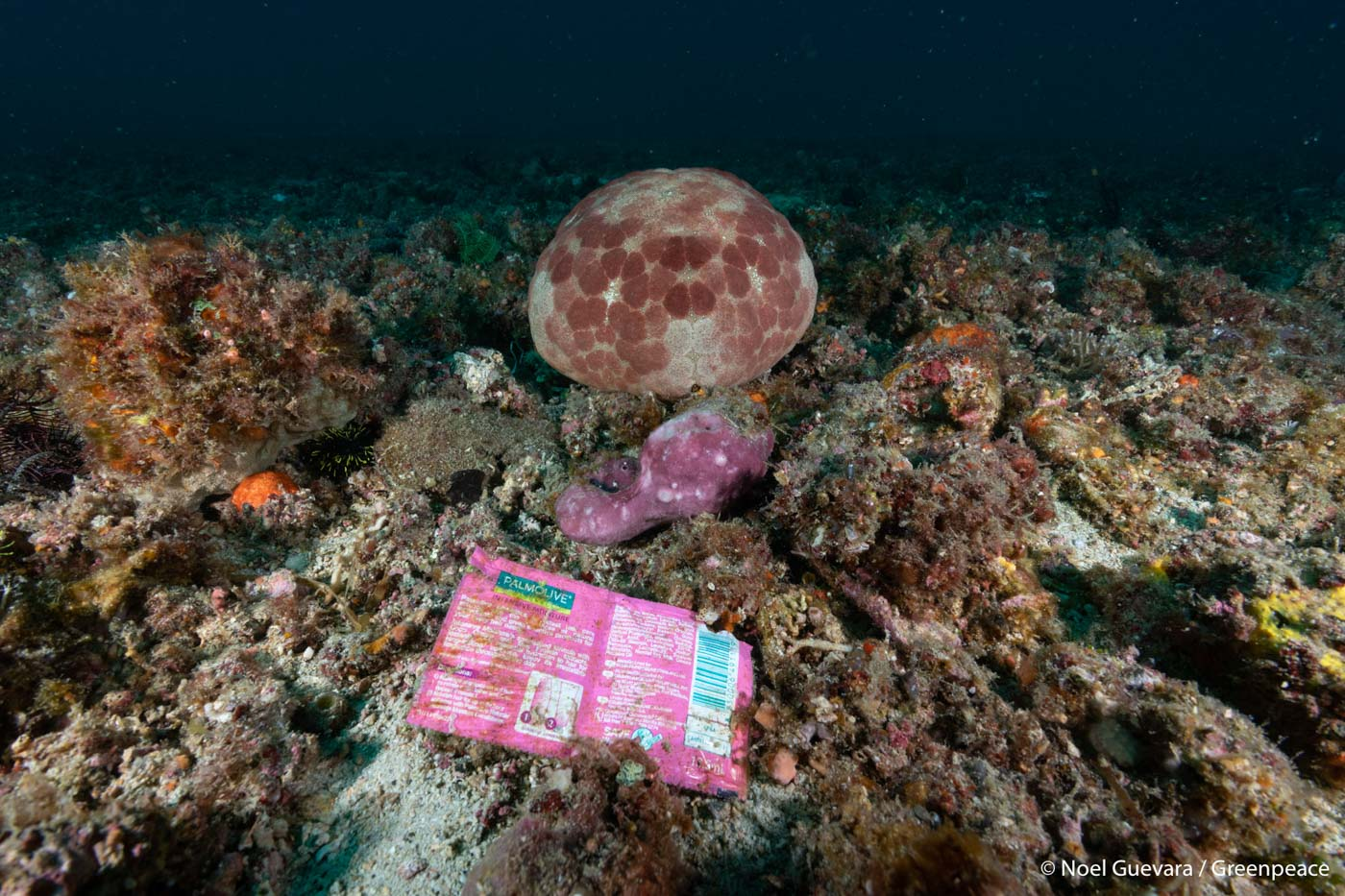 PLASTIC IN THE SEA. Several sachets of shampoo pollute the area along the Verde Island Passage on March 7, 2019. Photo by Noel Guevara/Greenpeace