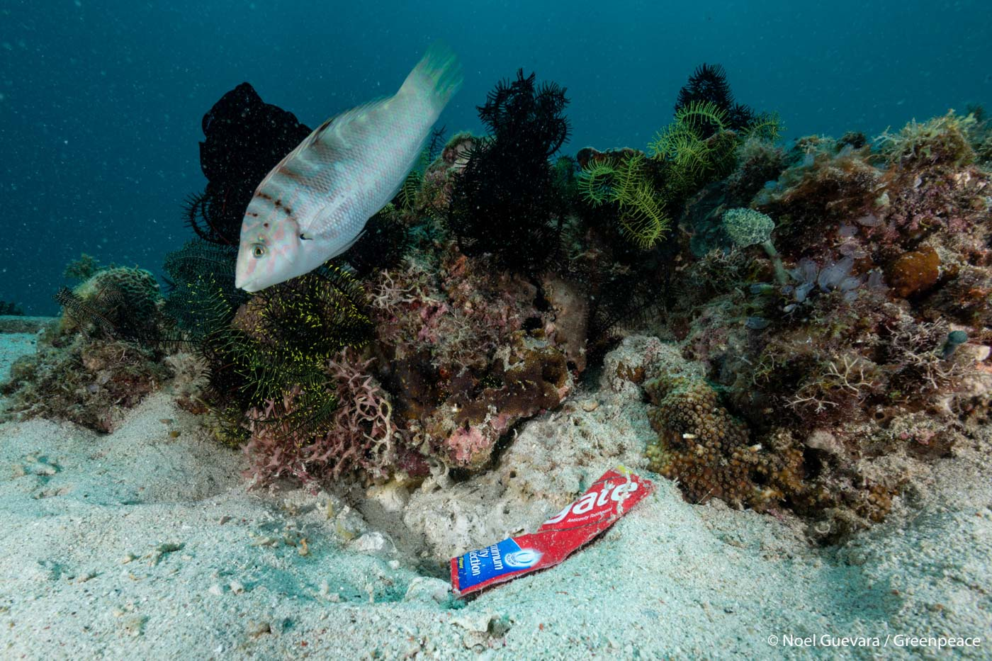 TOOTHPASTE. A toothpaste sachet of settles on the ocean floor near Maricaban Island on March 7, 2019. Photo by Noel Guevara/Greenpeace