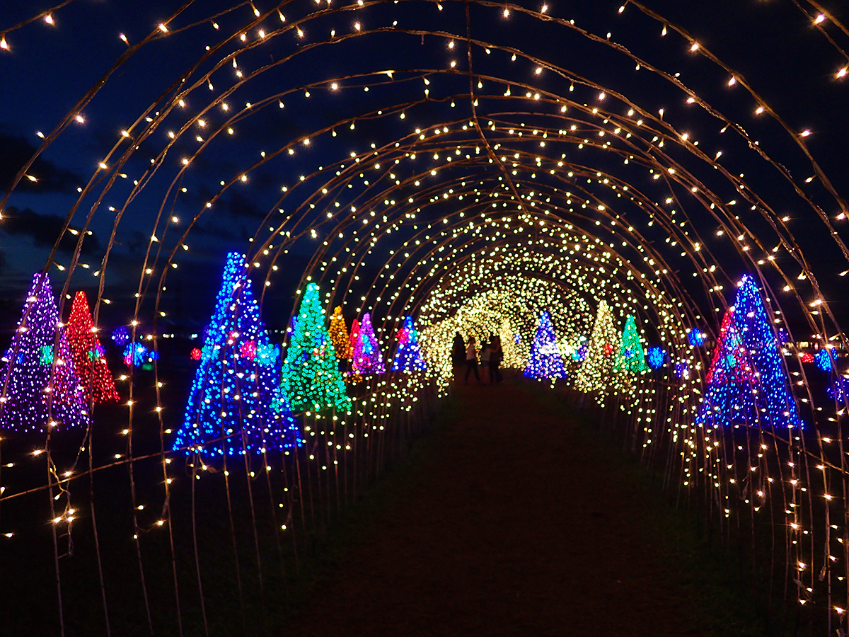 Go Look At Christmas Lights