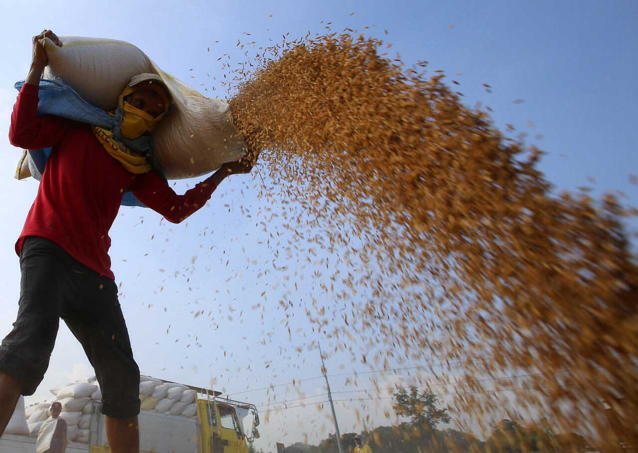 COPING WITH STORMS. A farmer from Pulilan, Bulacan start drying their palay after days of rains brought by Typhoon Lando. Photo by Albert Victoria/Rappler