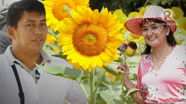 SEEDS OF HOPE. Sunflower farm in Tiaong, Quezon plants seeds of hope for PWDs. Photo by Empoy Soriano