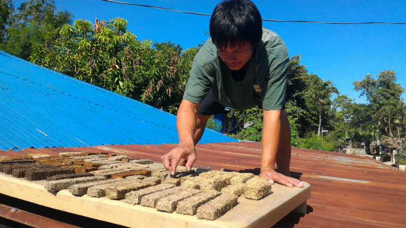AWARD-WINNING. In this photo, a villager helps in arranging lily briquettes for drying. Since its foundation, HiGi has received a number of international awards and recognitions.
