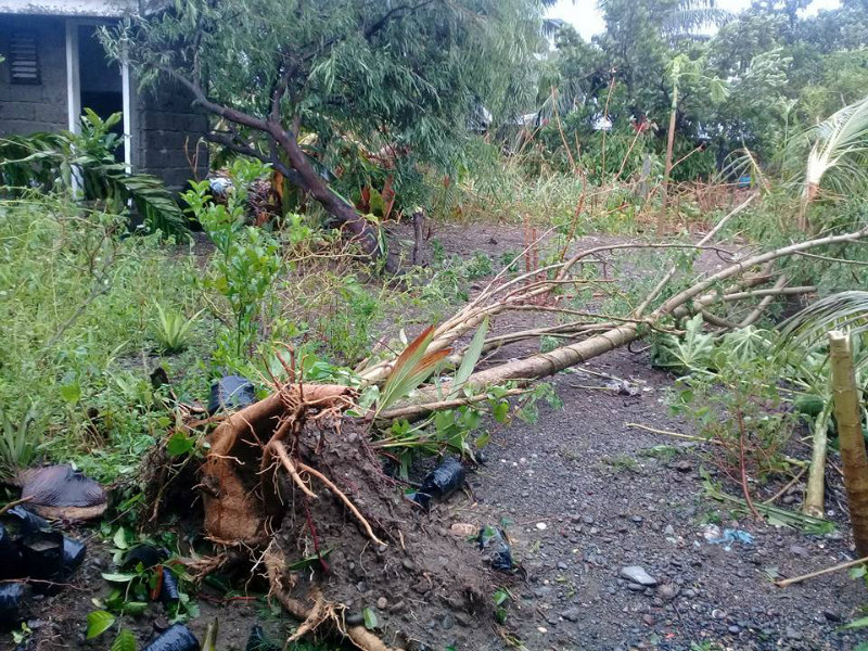 JOLINA AFTERMATH. Tropical Storm Jolina leaves uprooted trees in its wake. Photo by Digi Magloyuan