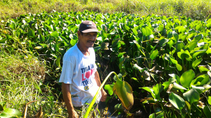 EMPOWERED COMMUNITY. HiGI Energy believes in prosumer capitalism—where the consumer is also the producer of a product. In this file photo, a farmer is harvesting water hyacinth from a lake.
