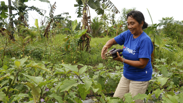 NEW CROPS. Maria harvests the eggplant at their family's organic vegetable garden just right across their house. Maria's family used to be solely dependent on coconut farming but after Typhoon Yolanda and other typhoons, the family learned to diversify their livelihood. Photo by Plan International