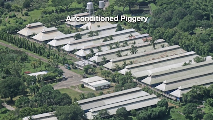 Piggery business in philippines