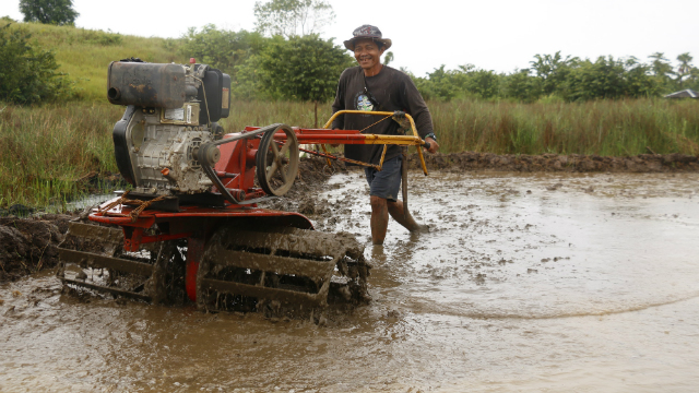 BETTER FARMING. Eutiquo Casiroman plows the rice field using the hand tractor provided to the farmers' association that he is a part of by Plan International. Photo courtesy of Plan International