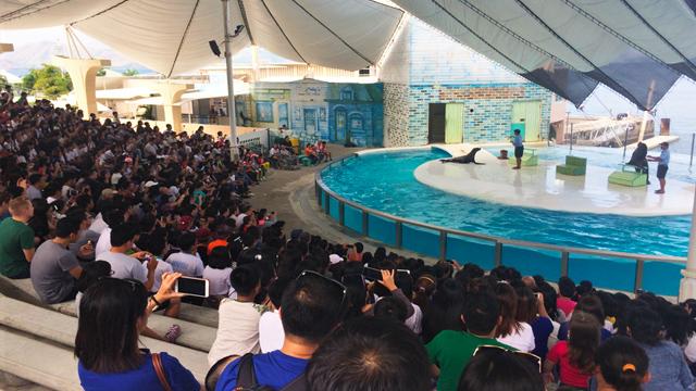 subic, WTH: Subic's Ocean Adventure could close down soon