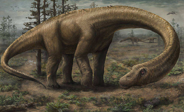 MASSIVE ANIMAL. Rendering of the massive Dreadnoughtus schrani in life. Dreadnoughtus had a 37-foot-long neck, 30-foot tail, and weighed an estimated 65 tons, making it the most massive land animal whose size can be confidently calculated.  Illustration by Jennifer Hall/Drexel University