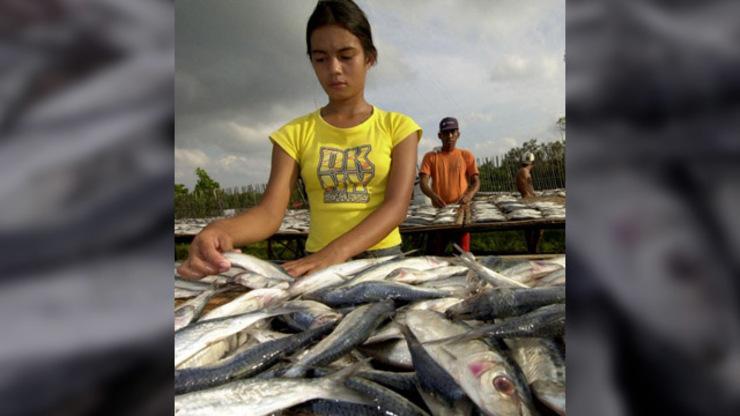Child Labor in The Philippines Child Labor Seen in 13 ph