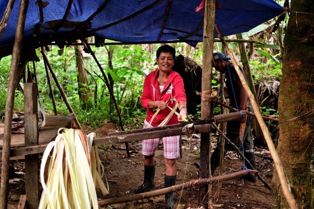 ROOT OF THE ISSUE. Felipa Dagaang, an indigenous Manobo farmer, shows how abaca is manually stripped in their community's facility in Sitio Himatagan, Barangay Agsam. Photo credit: VJ Villafranca/Oxfam