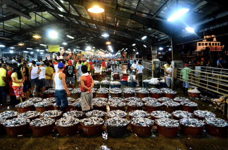 DAILY SCENARIO. Hundreds of fish-filled banyeras being auctioned by a fish broker at the Navotas complex in Manila, where an estimated 800 tonnes of fish and invertebrates are traded and sold daily.