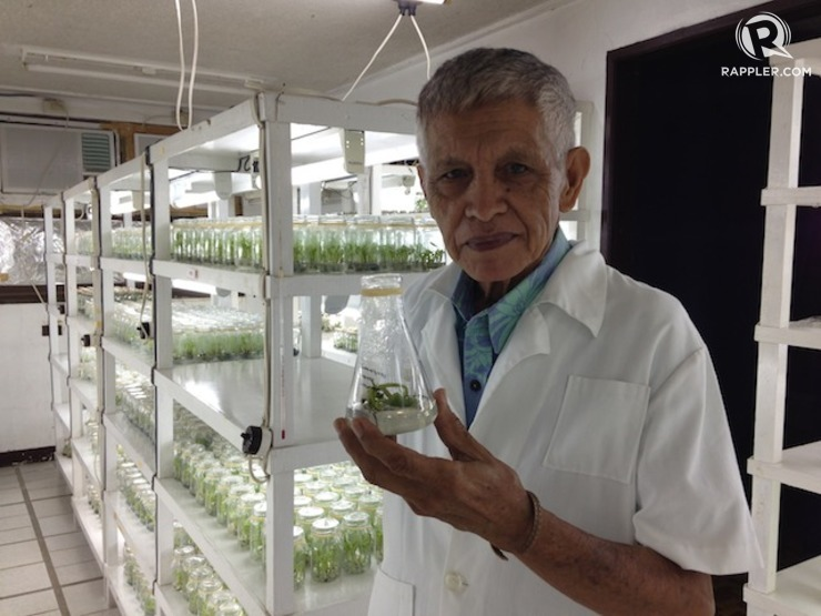Dr Ramon Barba, National Scientist (plant physiology). Photo by Shaira Panela