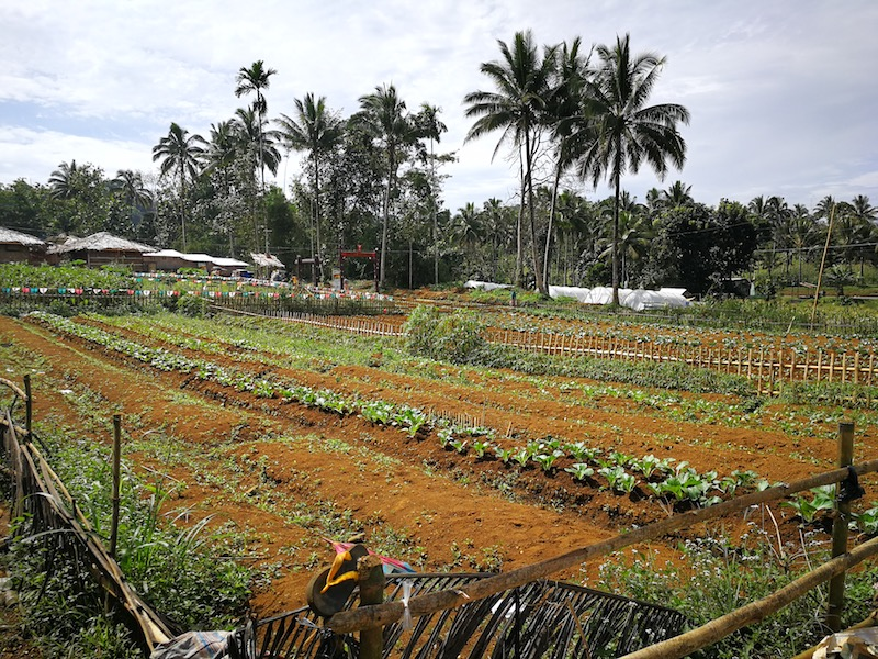 FERTILE FIELD. The resettlement community in Barangay Bito Buadi Itowa tends to their field as part of their livelihood. The site's fields consist of a number of plantation that provides the families supplies of food and income. All photos by Angelo Lorenzo