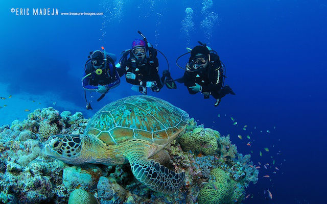 MARINE LIFE. The Tubbataha experience shows how marine life is sustained. Photo courtesy of the ASEAN Center for Biodiversity