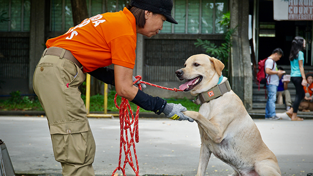 SEARCH AND RESCUE. The University of the Philippines adopts the MMDA K9 Corps search and rescue training at the UP vanguard. Photos by Rupert Ambil/Rappler