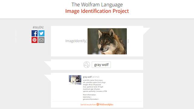 Identifying wolf vocalization and its purpose
