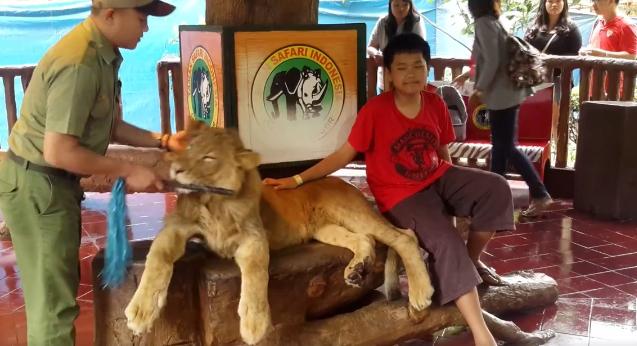 African lions safari coupons 2018