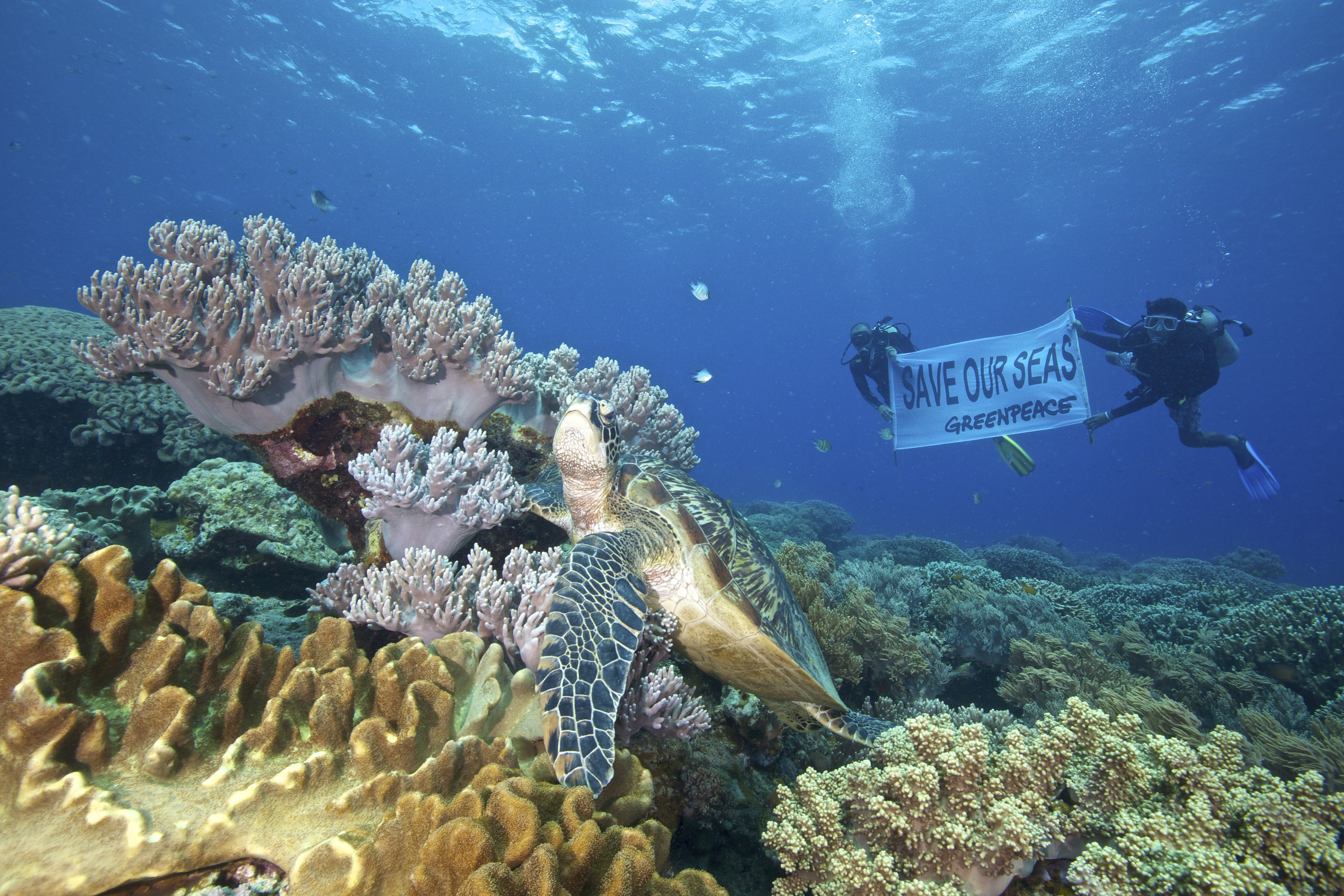 """planet philippines documentary Shot on location in hawaii, indonesia, the philippines, and australia  """"no matter  where you live on our planet you are connected to the sea."""