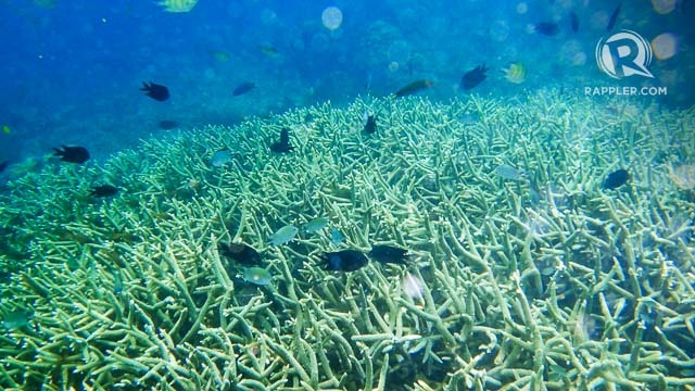 CORALS AND FISH. Coron has snorkeling sites thriving with marine life