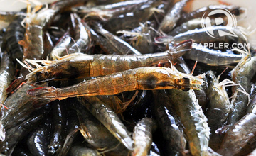 PH eyes bigger shrimp production for export