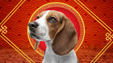 Your horoscope for Chinese New Year 2018, the Year of the Dog
