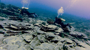 CORAL-RICH. Researchers say Benham Bank is rich in corals. Photo courtesy of Dr Hildie Nacorda/UPLB-SESAM