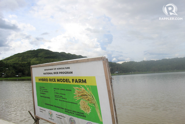 FROM FARM TO 'LAKE'. A 30-hectare hybrid rice model farm turns into a lake after Tropical Depression Agaton brought nonstop heavy rains to the province since New Year's Day. Photo by Michael Ortega Ligalig/Rappler