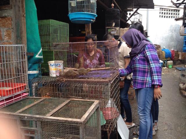 Jejak Perdagangan Ilegal Satwa Liar Di Surabaya
