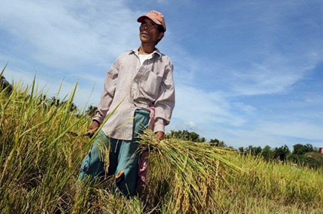 filipino farmers Filipino farmers urged to sell their palay to nfa 'we are appealing to the farmers to help us also it is not only the task of nfa to ensure food security of the.