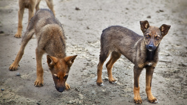 WHO warns against counterfeit anti-rabies vaccines, serum
