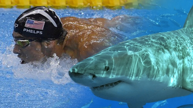 Michael Phelps loses race against great white shark, sort of