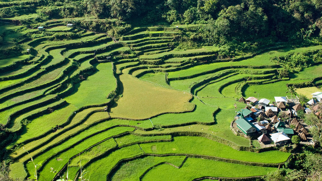 Ifugao rice terraces may be younger than we think for The terraces 2