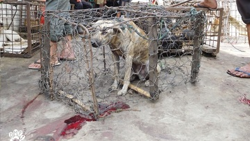 Dogs, cats slaughtered: 'Extreme' markets horrify activists