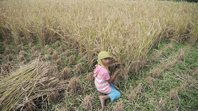 child labor in agriculture essay To the mental and physical health of the child the labor code also prohibits persons child labor the campaign focused on agriculture these child labor.