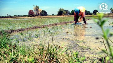 DA awaits P939 million budget for El Niño efforts