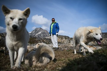In Greenland village, shorter winters cast doubts over dog