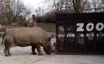 And then there were 4: rare rhino dies at Czech zoo