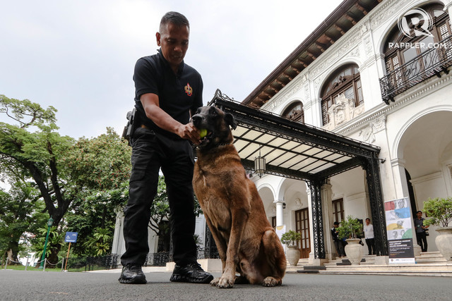 DINDO'S DUTY. Presidential Security Guard (PSG) Chief Sergeant Richard Parco plays with Dindo, a k9 Belgian Malinois dog, inside the Malacanang Grounds in Manila. File photo by Lito Boras/Rappler.com