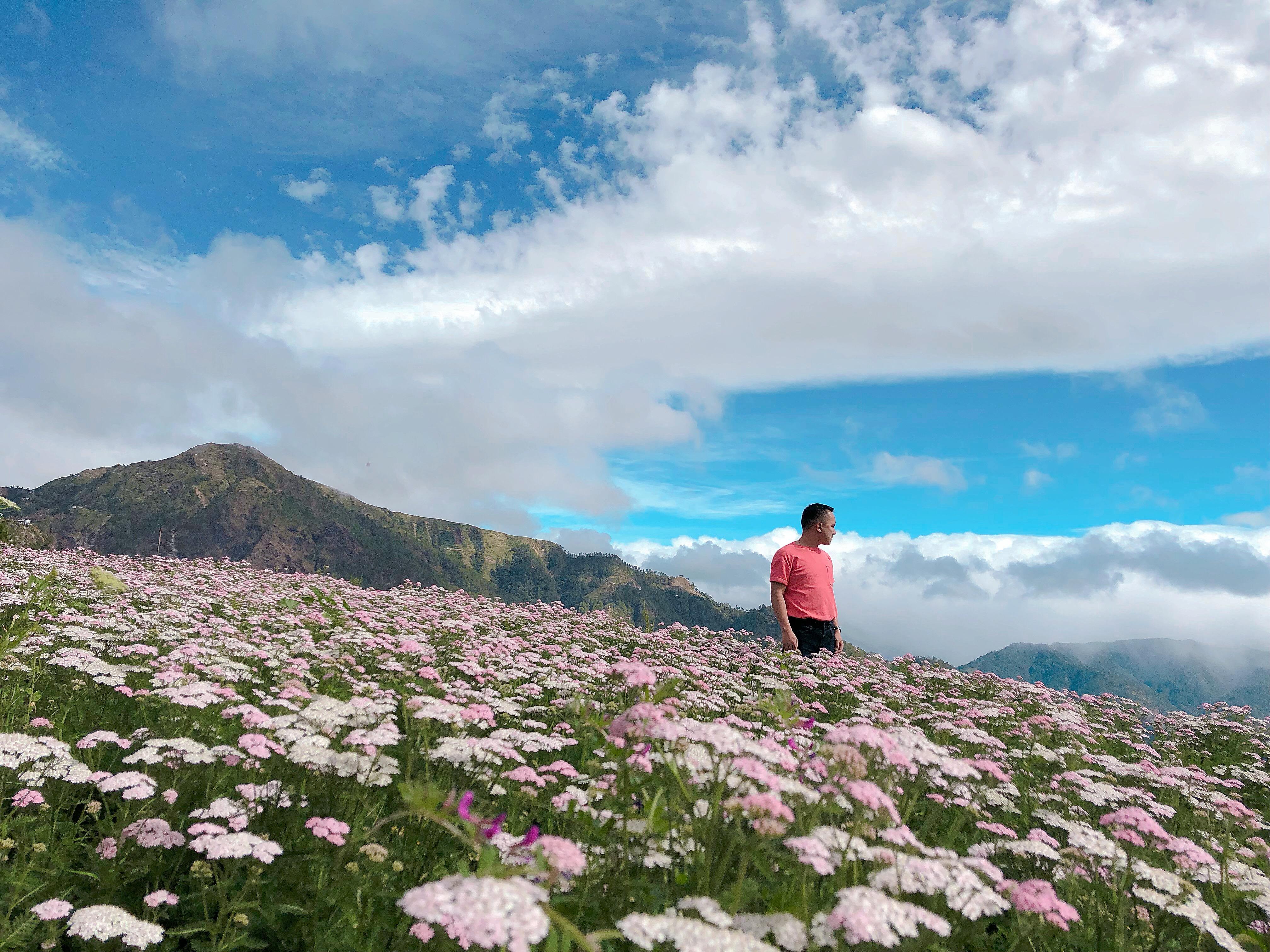 Northern Blossom Flower Farm Atok S Floral Carpet