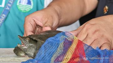 Customs bureau foils smuggling of wildlife species