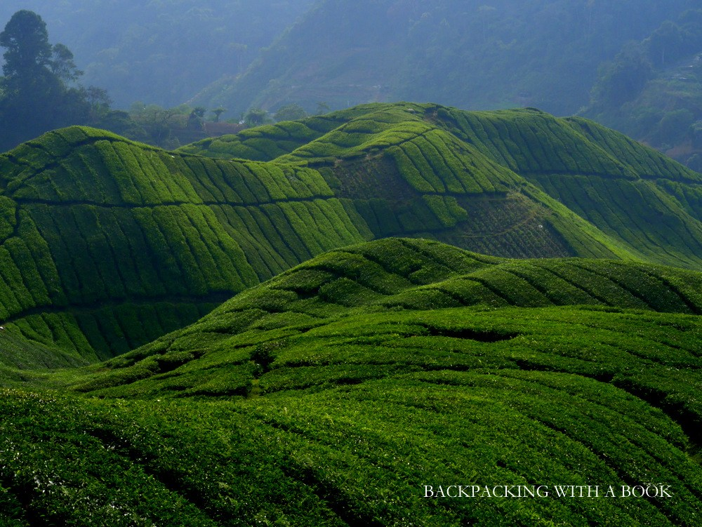 essay about trip to cameron highlands